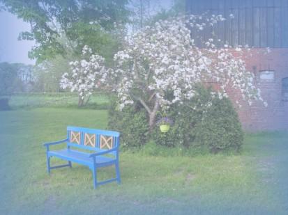 Der Feenbaum steht in voller Blüte!