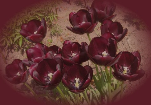 Blühende Tulpen erwarteten die Freunde des Phönix.