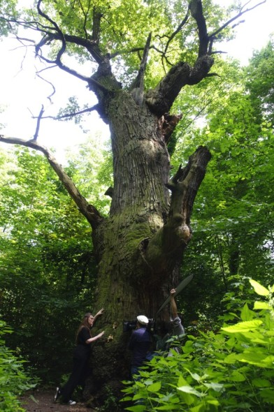 Dreharbeiten an Berlins ältestem Baum.