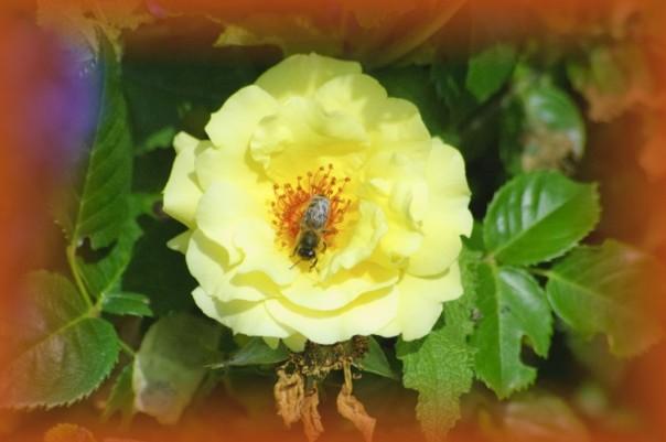 Zur Blütezeit findet man in den 'Gärten der Welt' alle Formen von Blüten und Blumen.
