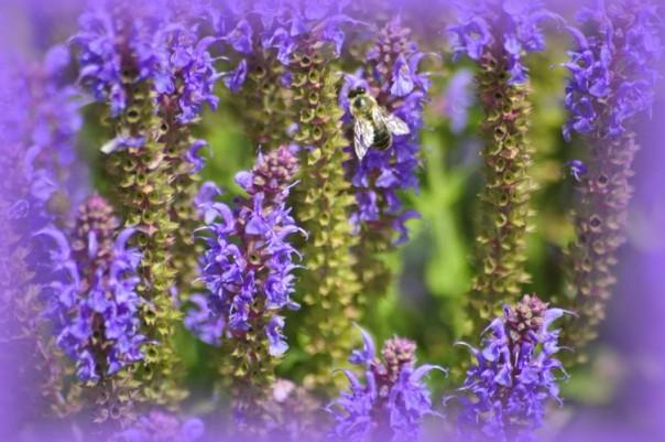 Ein Traum in violett. Foto: Thanis Voyant