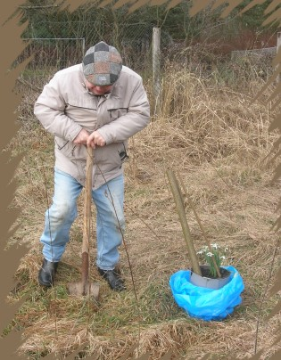 Und ehe man  versieht ist das Grundstück um drei Haselnüsse und einige Schneeglöckchen reicher. Mögen sie angehen!