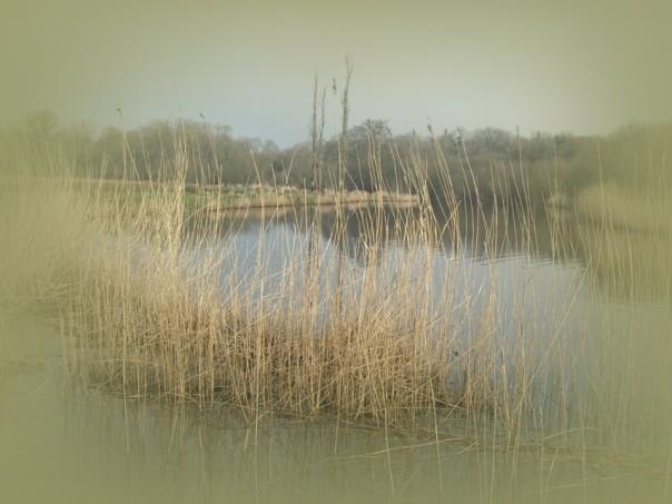 Windstill und ruhig liegt das Gewässer vor uns.