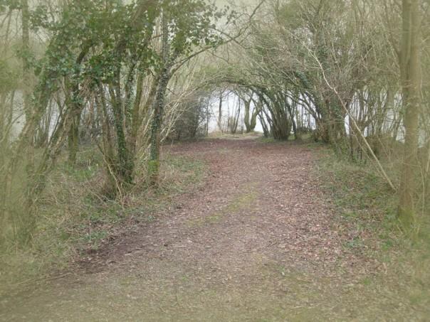 Hinter einer Weide, kurz vor einem See, findet man einen Weg der scheinbar ins Nichts führt. Hier wächst ein natürliches Feentor, ein direkter Zugang zur Anderwelt.