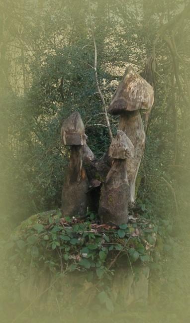 Ganzjährige Pilze - so etwas kann man hier in den Wäldern finden.