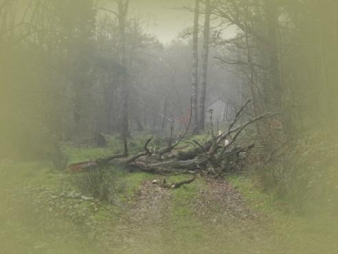 Vom Sturm gefällt und mehrfach geborsten...