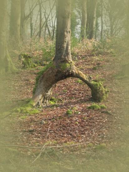 Überall in Irland finden sich Feentore,  Wichtelbrücken und Elfenpfade.