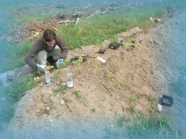 Brighid bei setzen der Pflanzen
