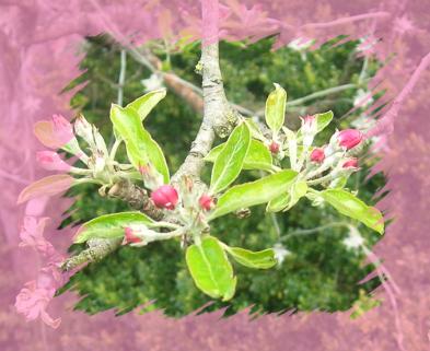 Ein Blütenmeer empfing uns im Garten der Sternschnuppe