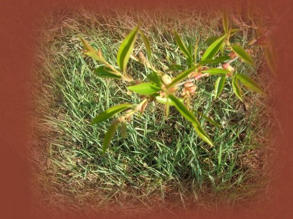 Überall grünt es