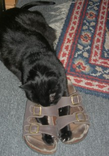 Naa! Hoffentlich passen ihr die Schuhe besser als mir!