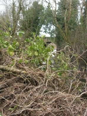 Ein umgefallender Baum und allerlei Treibgut, welches sich in ihm verfangen hat, stoppen unsere Bootstour.