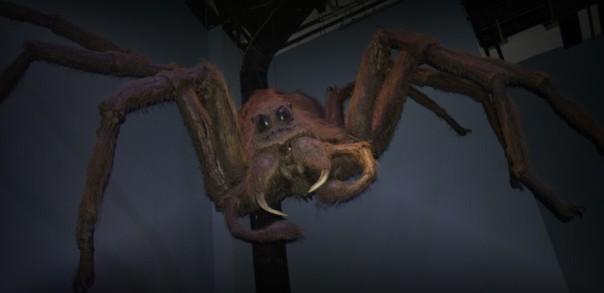 Diese etwa drei Meter große Acromantula ist als Haustier insgesamt sehr ungeeignet.