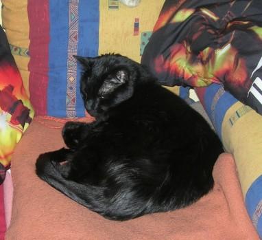 Hexenkater Iggy genießt die Herbstabende gemütlich auf dem Sofa.