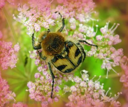 Käferchen aus meiner Fotosammlung.